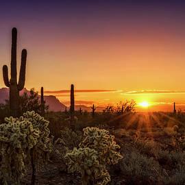 Saija Lehtonen - Rise and Shine Arizona