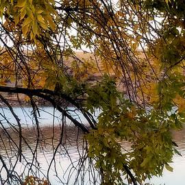 Susan Kinney - River Scene