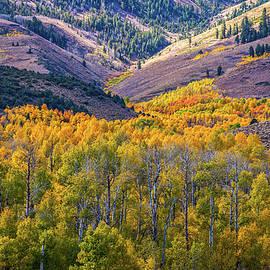 Lynn Bauer - Rivers of Fall Aspen