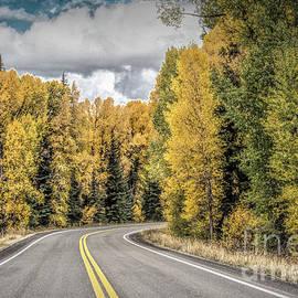 Lynn Sprowl - Road Through the Park
