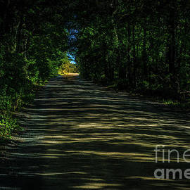 Road Through The Woods by Roger Monahan