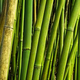 Road To Hana Bamboo Panorama - Maui Hawaii by Brian Harig