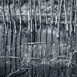 Allan Van Gasbeck - Roadside Reflections Black and White