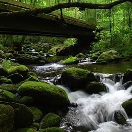 Roaring Fork Stream by Pat Turner