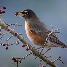 Inge Riis McDonald - Robin eating berries