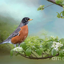 Bonnie Barry - Robin in Chinese Fringe Tree