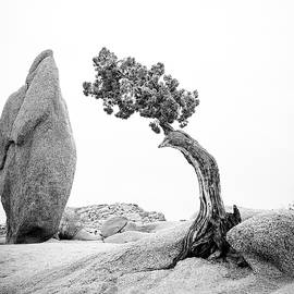 Rock and Tree by Alex Snay