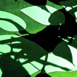 Rock Paper Shadows 5 by Bonnie See
