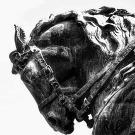 Rocking Horse by AJ Schibig
