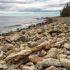 Elizabeth Dow - Rocky Coast Schoodic Point
