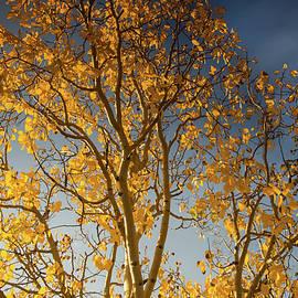 Kunal Mehra - Rocky mountain fall colors
