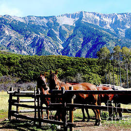 Dale E Jackson - Rocky Mountains Horses Country Living II