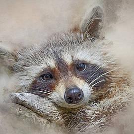 Brian Tarr - Rocky Raccoon