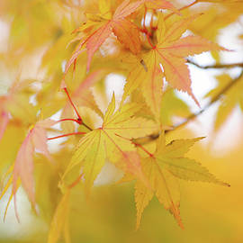 Jenny Rainbow - Romance with Autumn. Japanese Maple Leaves 6