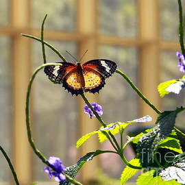 Romantic Butterfly by Charlene Cox