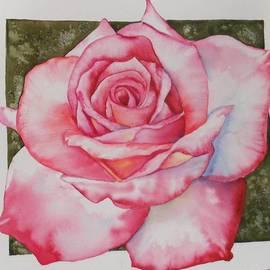 Rose 3 by Diane Ziemski