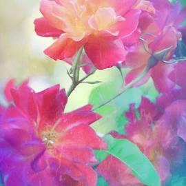 Rose 391 by Pamela Cooper