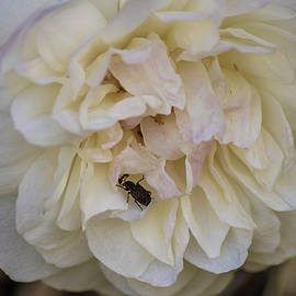Tania Read - Rose And Beetle