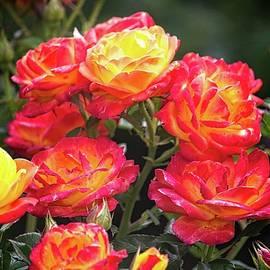 Phyllis Champeau - Rose Bouquet
