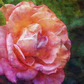 Steven Ward - Rose Chiffon 1276 IDP_2
