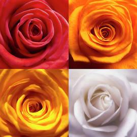 Johanna Hurmerinta - Rose Collage