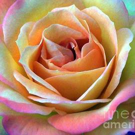 Rose collection by Charlene Cox