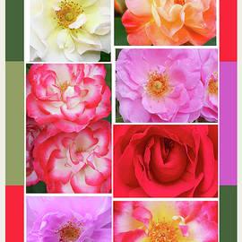 Regina Geoghan - Rose Garden Sampler