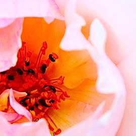 Rose Heart by Loretta S