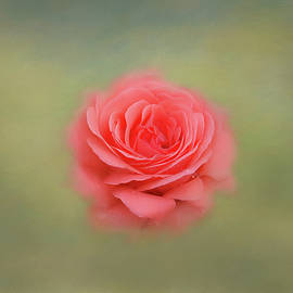 Kim Hojnacki - Rose Impressions