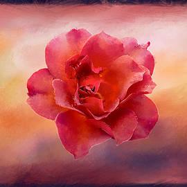 Terry Davis - Rose in Frame