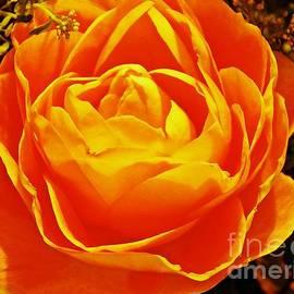 Sarah Loft - Rose in Orange