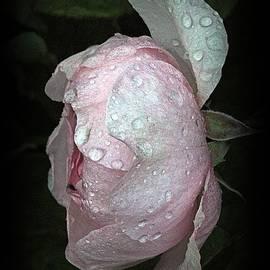 Richard Stubbs - Rose In The Shadows