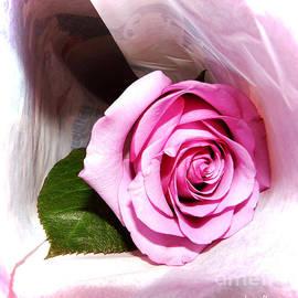Jasna Dragun - Rose