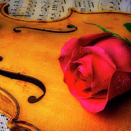 Rose Lasying On Violin - Garry Gay