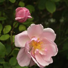 Robert Murray - Rose Mary Wallace