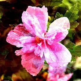 Ericamaxine Price - Rose of Sharon - Watercolor