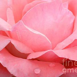 Regina Geoghan - Rose Petals and Raindrops