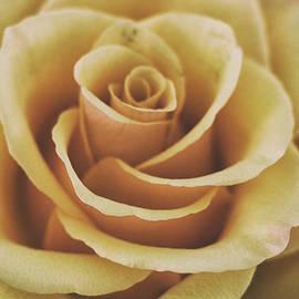 Rose Texture - Martin Newman