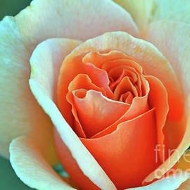 Debby Pueschel - Rose Veins