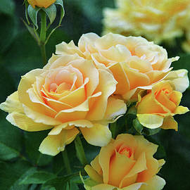 Yellow Roses 3 by Isabela and Skender Cocoli