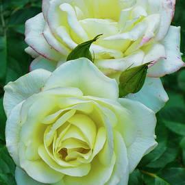 Rose021 by Isabela and Skender Cocoli