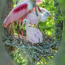 Bonnie Barry - Roseate Spoonbills in Evangeline Parish Louisiana