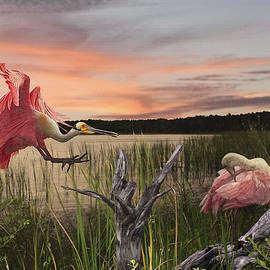 Spadecaller - Roseate Spoonbills of Florida