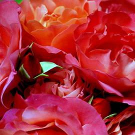 Renee Olmsted - Rosebud in Roses 2121
