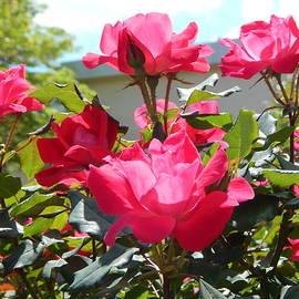 Arlane Crump - Roses