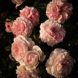 Richard Cummings - Roses Aug 2017