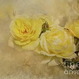 Eva Lechner - Roses Delight