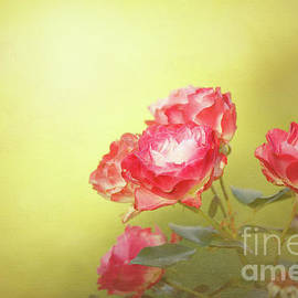 Beve Brown-Clark Photography - Roses from the Garden