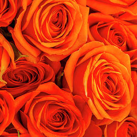 Teri Virbickis - Roses in Orange