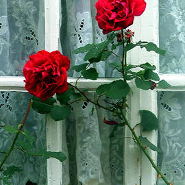 Mindy Newman - Roses in the Window